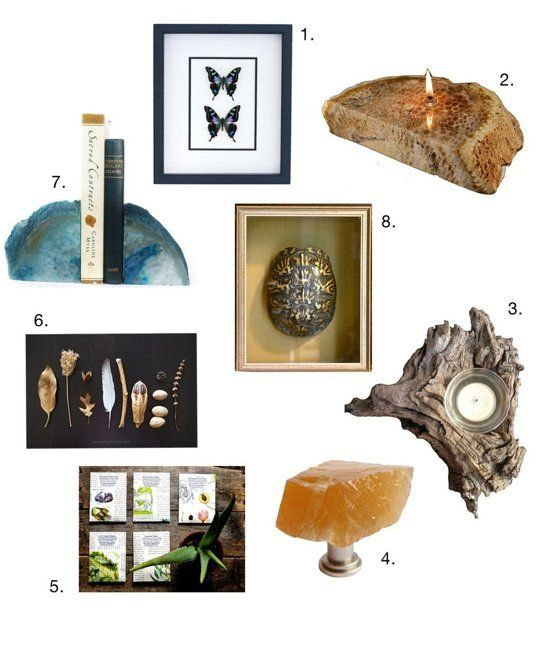 Natural History-Inspired Home Accessories