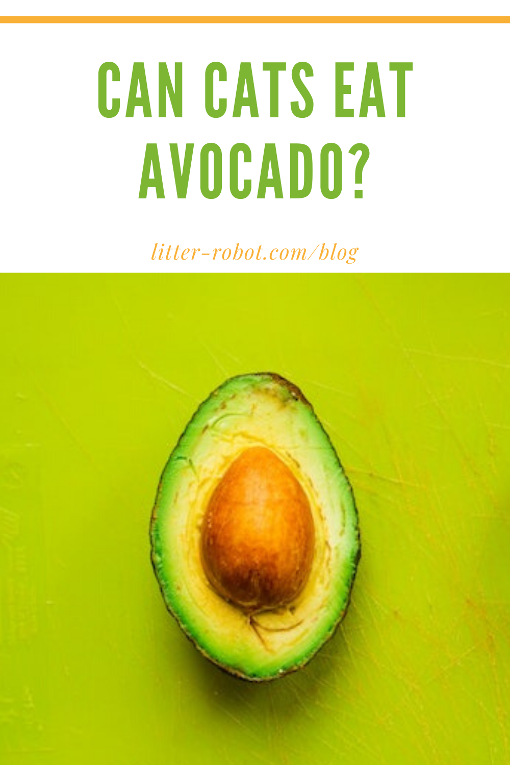 Can Cats Eat Avocado? Learn more on LitterRobot Blog in
