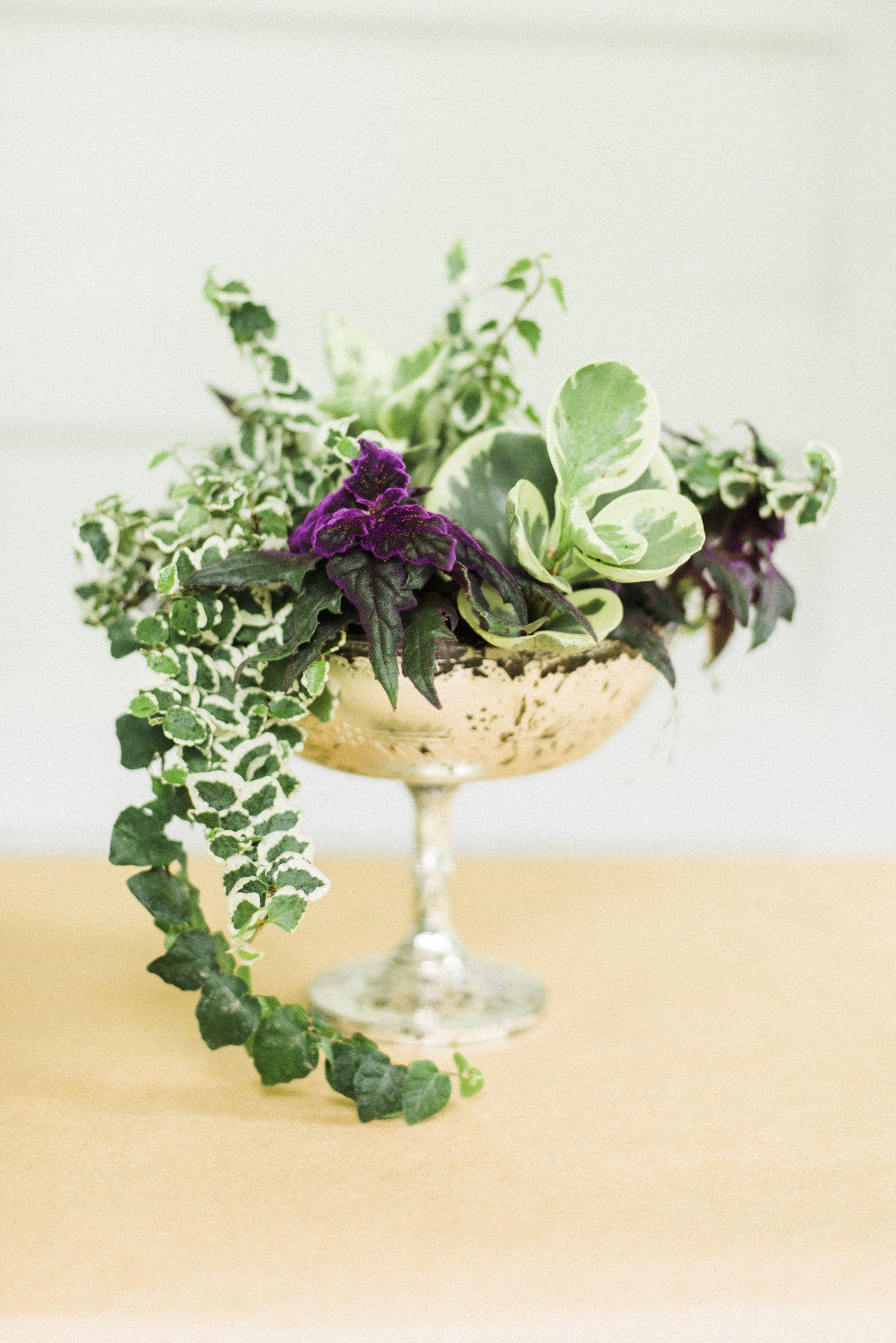 Diy Living Plant Centerpieces Plant Centerpieces Potted Plant