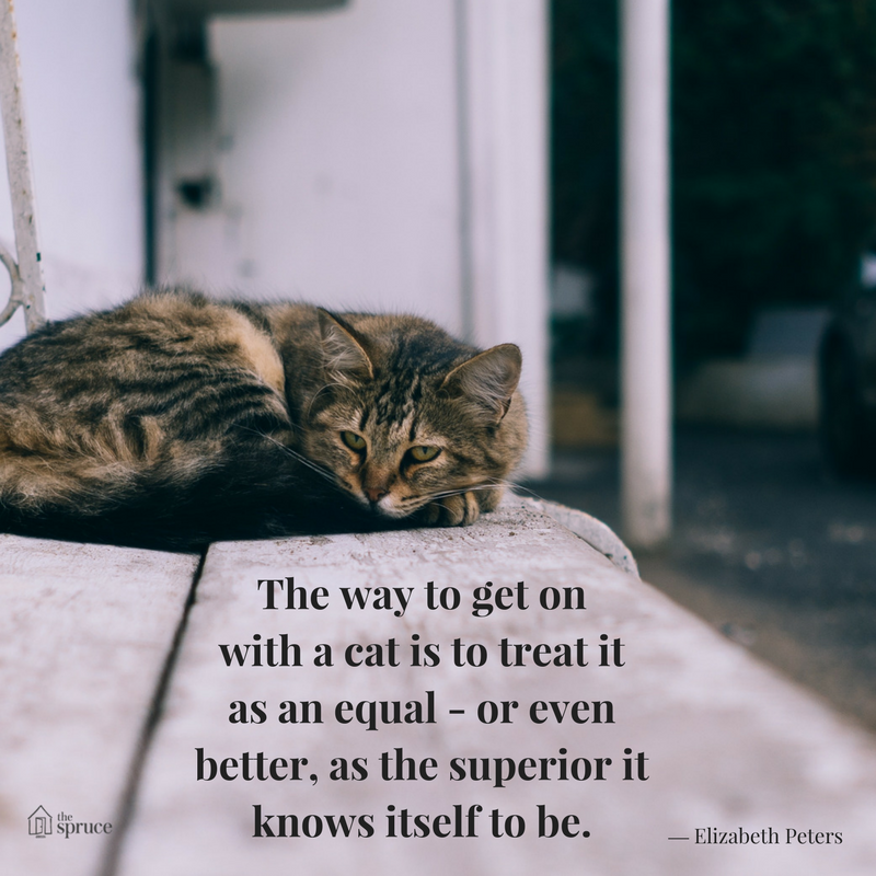 How to Be a Responsible Cat Owner Low maintenance pets