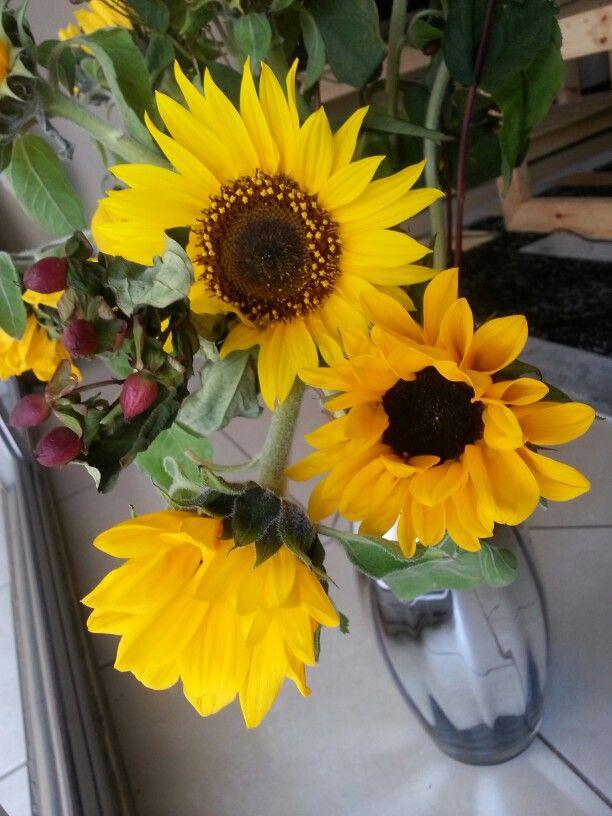Heaven I love sunflowers...♥