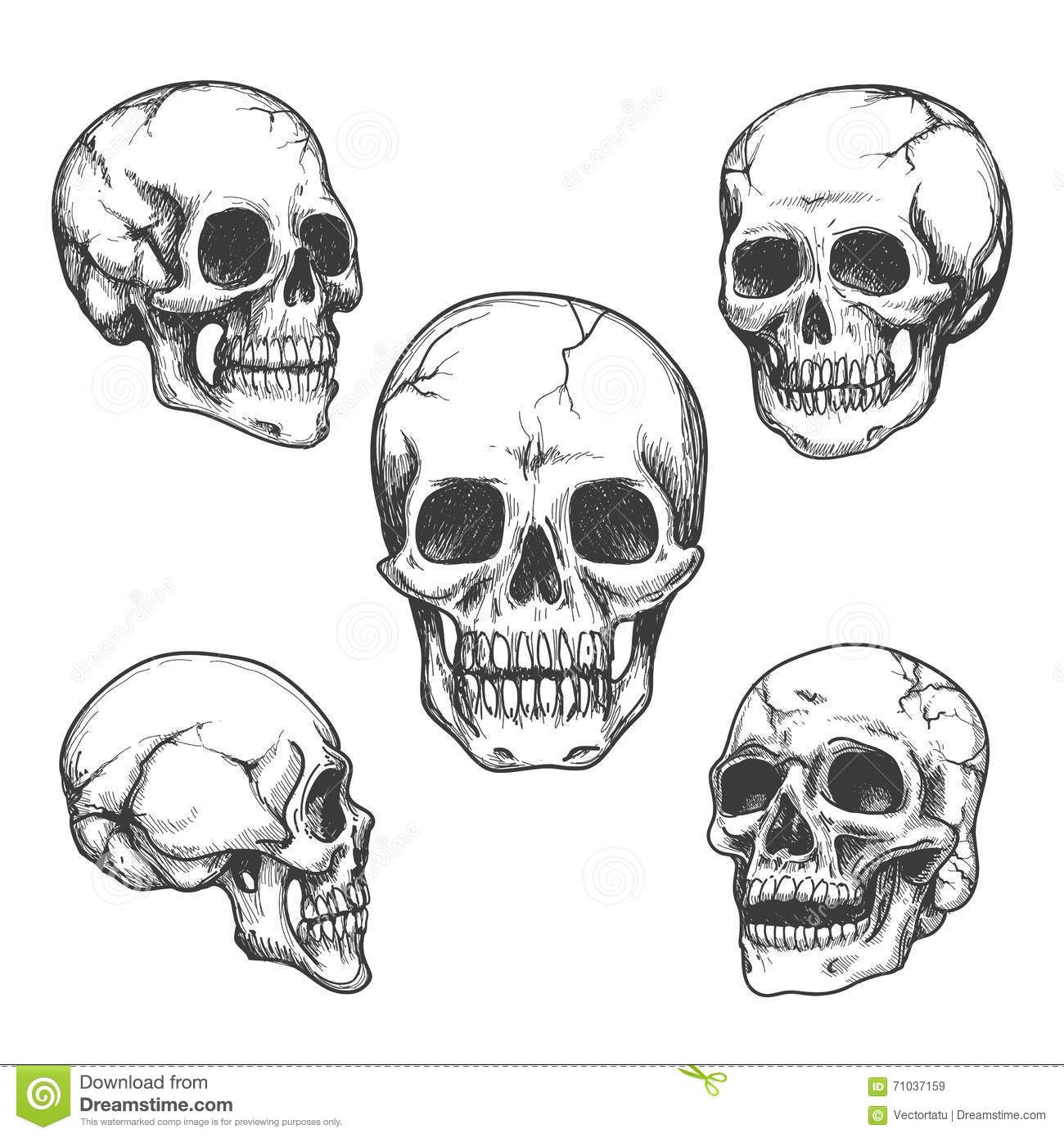Related image Skulls drawing, How to draw hands, Skull