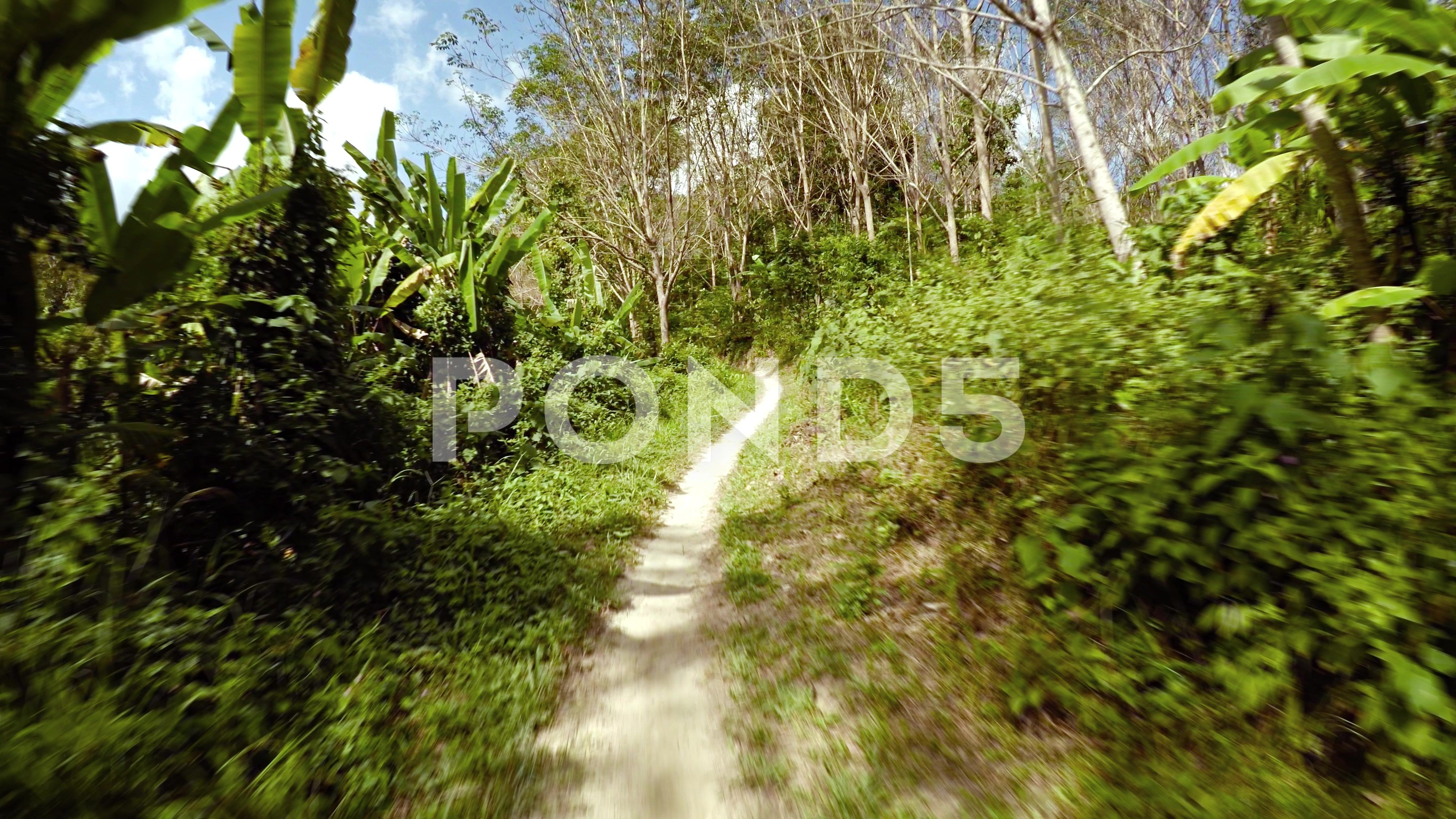 Passing Along Tropical Nature Trail In Slow Motion Video Ultrahd Stock Footage Ad Trail Slow Nature Passing With Images Nature Trail Nature Trail