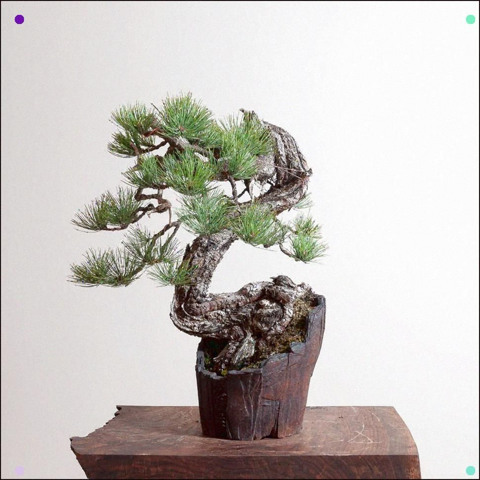 Ponderosa Pine No 1 Bonsai Mirai In 2020 Pine Bonsai Bonsai Art Bonsai
