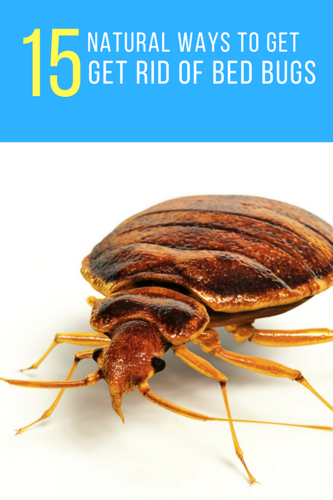How To Get Rid Of Bed Bugs Forever 15 Natural Ways Glamorous How To Get Rid Of Spiders In Bedroom Design Inspiration