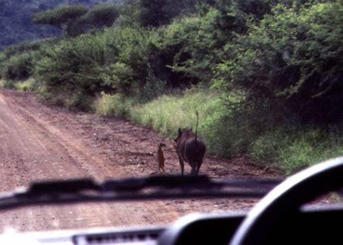 Simon y Pumba =O   =)