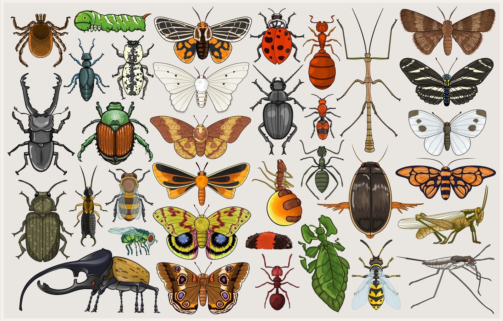энтомология в картинках тому техника