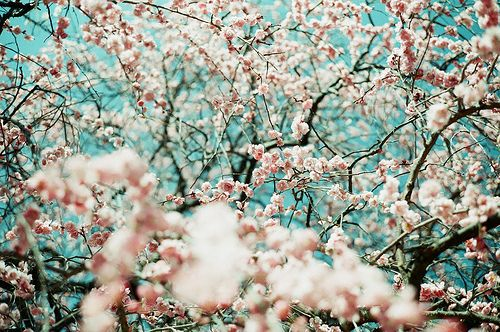 Source url http kootation com trees and flowers on tumblr flowers source url http kootation com trees and flowers on tumblr mightylinksfo