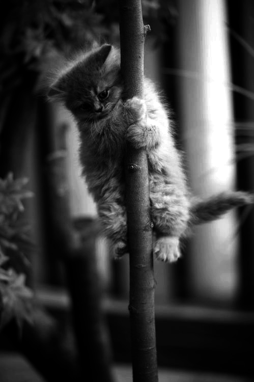 Darling Kitten