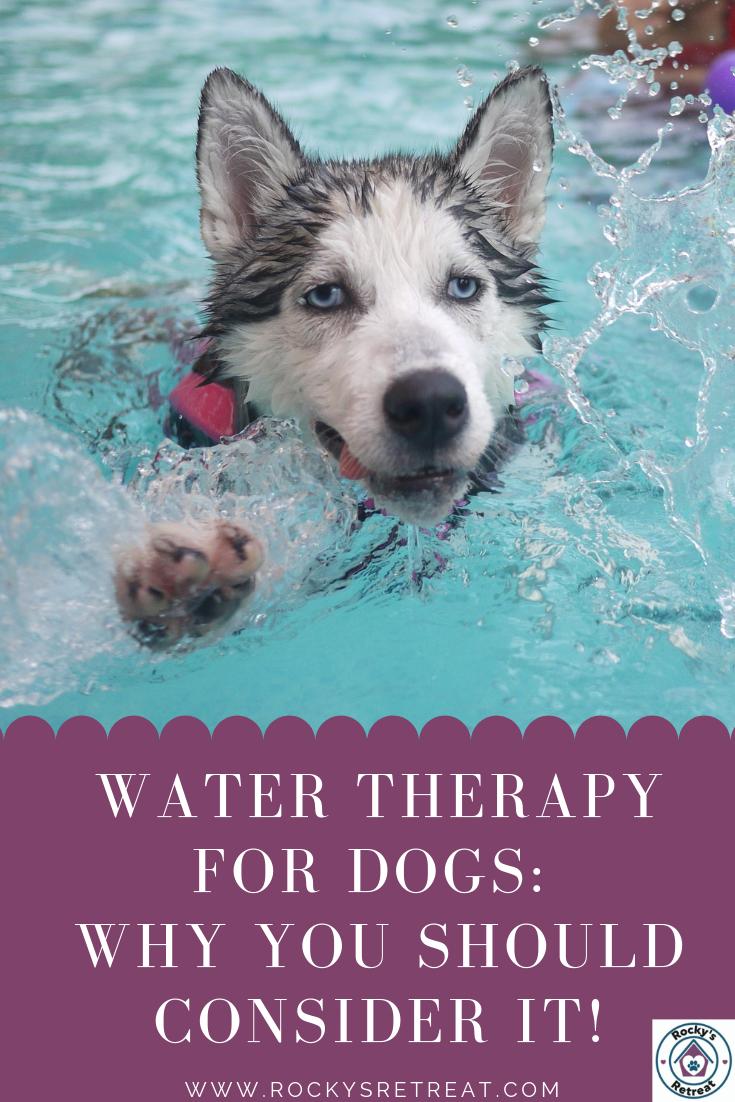 Water Therapy For Dogs Happy Dogs Dog Owners Your Dog