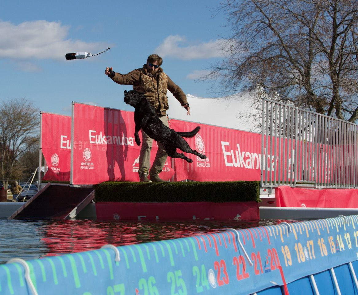 Diving dogs make big splashes at north american diving