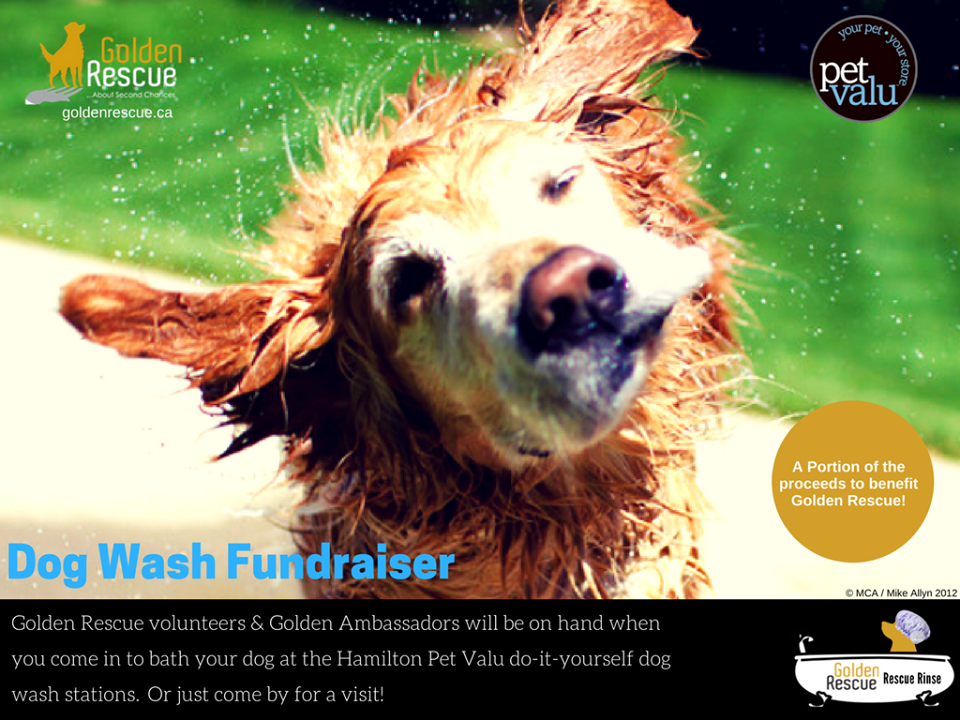 Stop by and help us raise funds for golden rescue pet valu 1550 stop by and help us raise funds for golden rescue pet valu 1550 upper james street is donating proceeds to gr from their do it yourself dog wash stations solutioingenieria Images