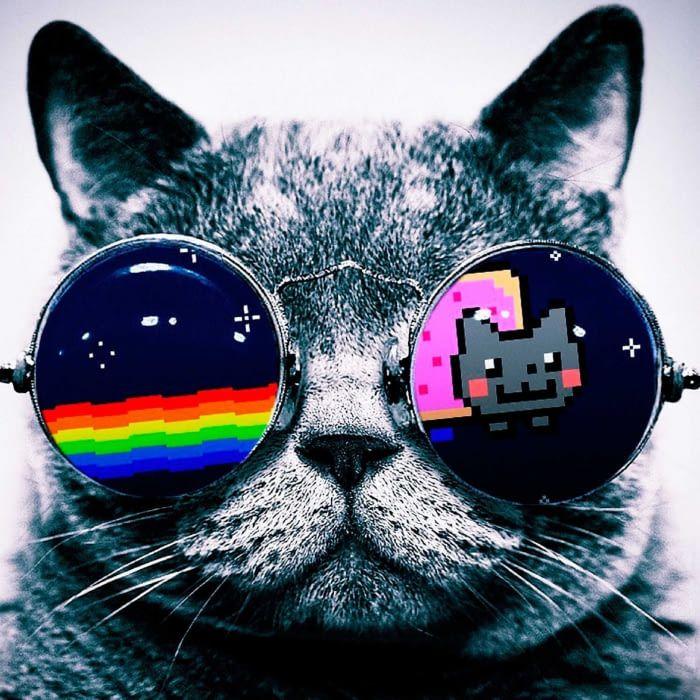 Nyan Cat Cat Sunglasses Cat Wallpaper Animal Paintings