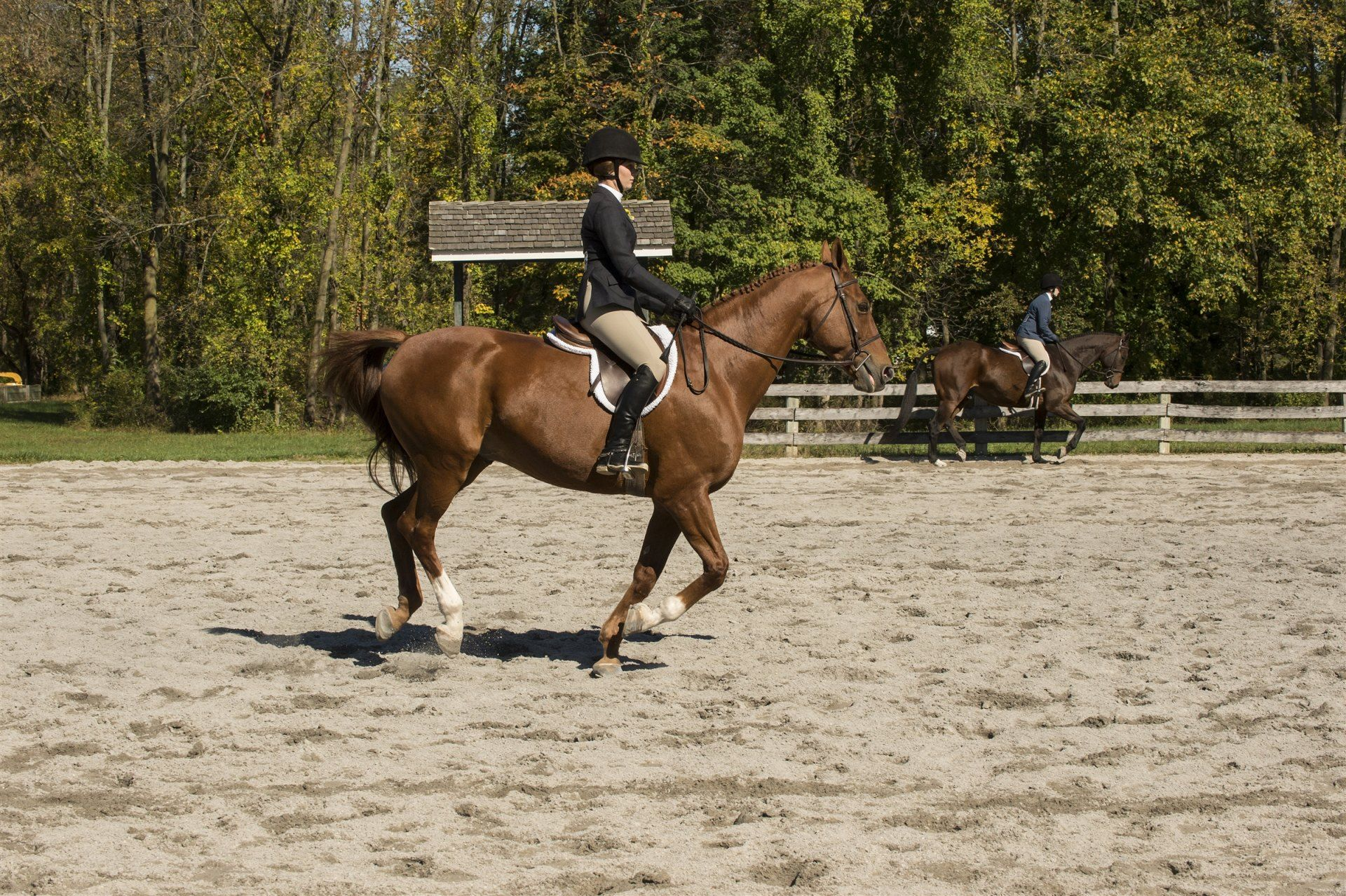 St Timothy S School Day Of Giving Power Of Gratitude Riding Equestrian Show Horses