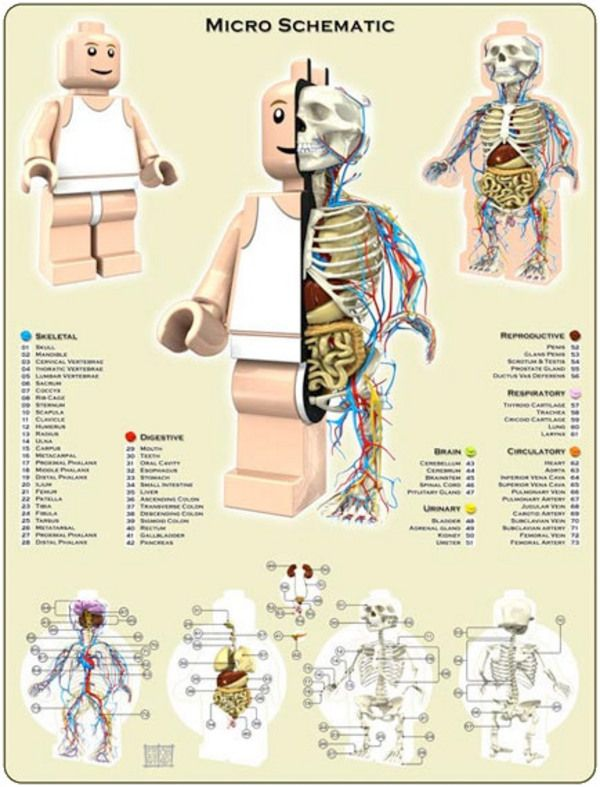 Lego Anatomy by Jason Freeny - I\'m sure that my kids never knew what ...