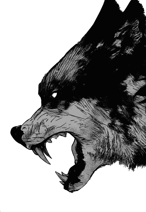 Black And White Wolf Art Snarling Wolf 2d Art