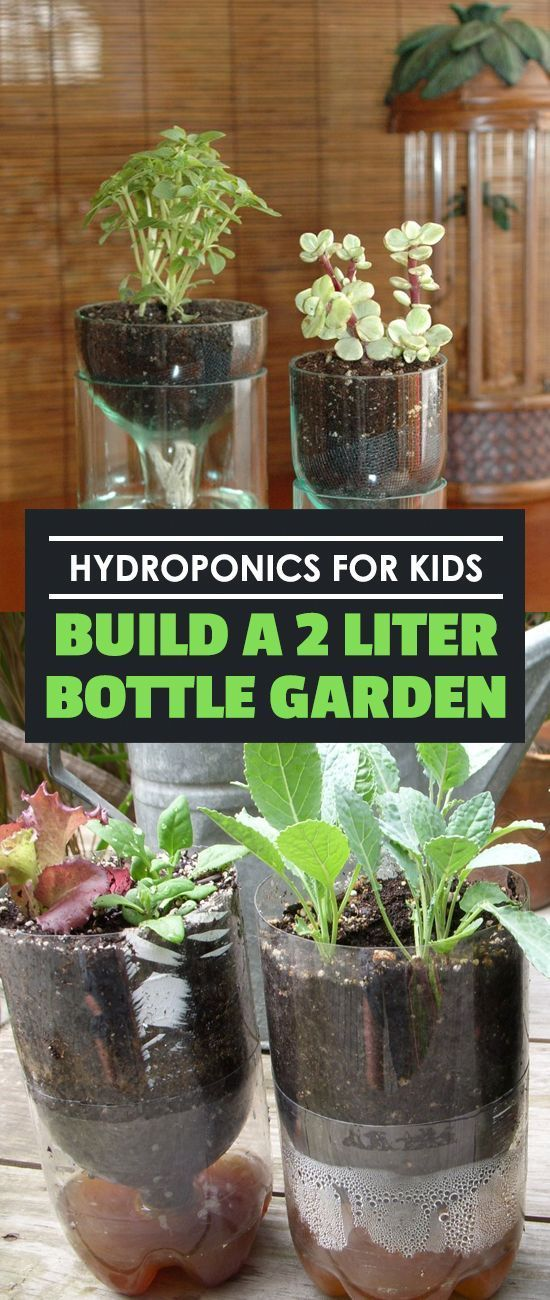 Hydroponics for Kids Build a 2 Liter Bottle Garden is part of Bottle garden, Indoor vegetable gardening, Hydroponics diy, Hydroponic growing, Hydroponic gardening, Hydroponics - Hydroponics for kids is a great way to involve them in how their food grows  This simple two liter bottle hydroponic experiment can be done in a weekend