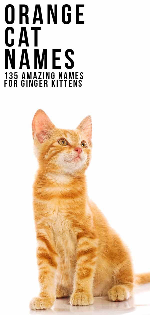 Orange Cat Names 169 Amazing Names For Ginger Kittens