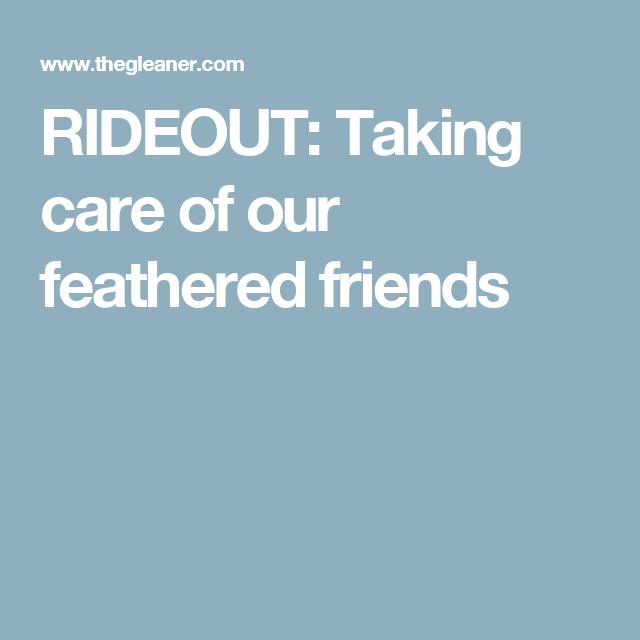 RIDEOUT: Taking care of our feathered friends