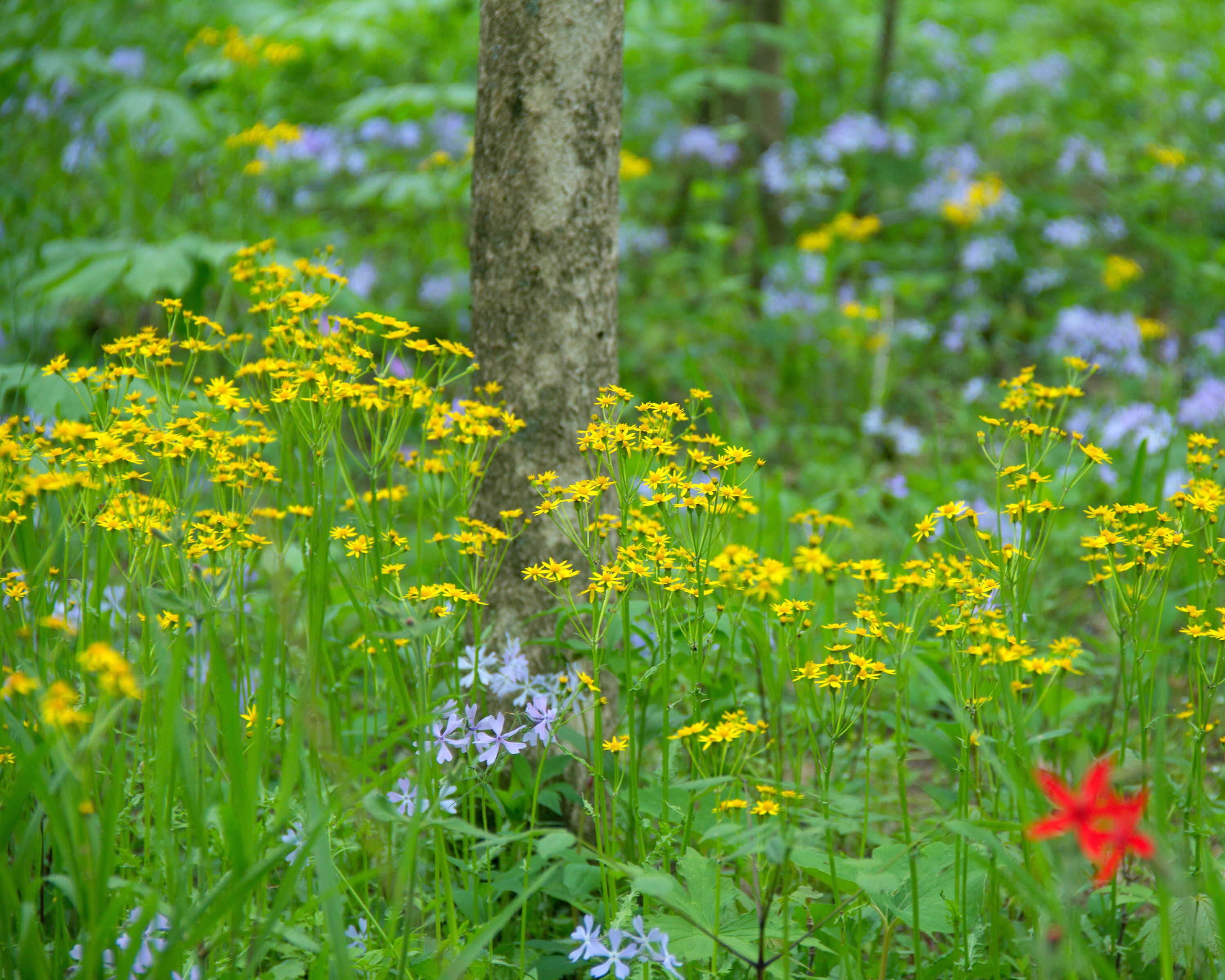 Wild Flowers Woodland Photography Yellow Flower Red Flower Nature Print Landscape Photography Large Wall Decor Country Chic Entryway Wall Decor Design Large Wall Decor Butterfly Wall Decor
