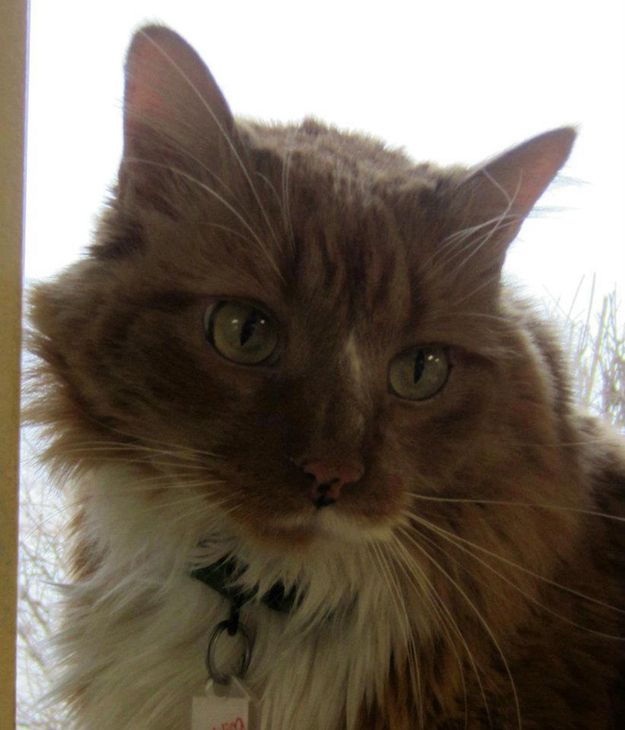 Kitty!    Meet The Cat Who Saved His Owner's Life