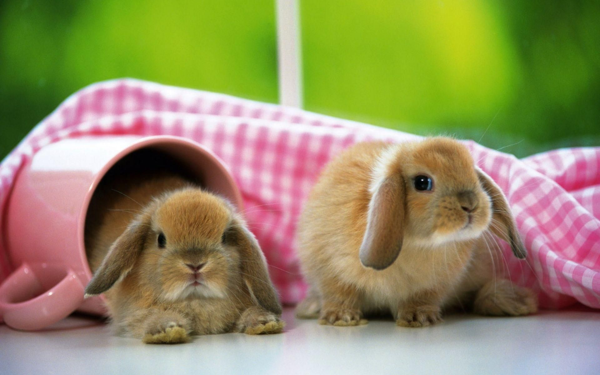 Animals For Baby Rabbit Wallpaper Cute Bunny Pictures Cute Animals Funny Rabbit