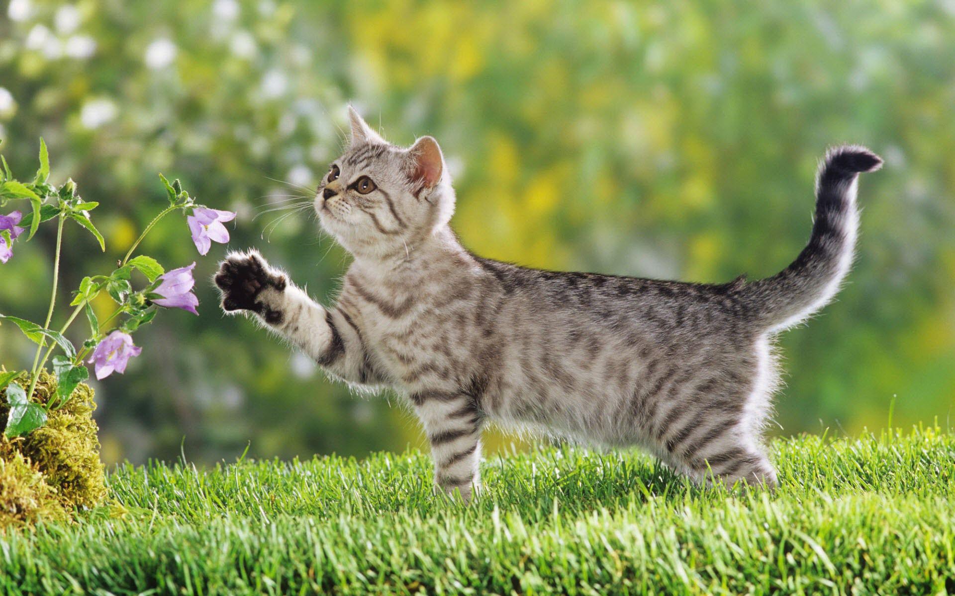 Обои friends, grass, cat, cute. Животные foto 18