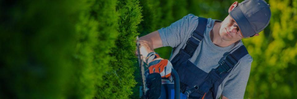 How often should you water your Florida lawn in the winter