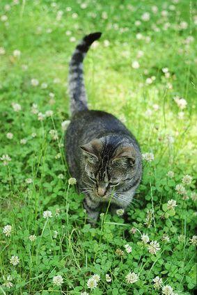 Cómo deshacerse de las pulgas en los gatos con un remedio casero natural | eHow en Español