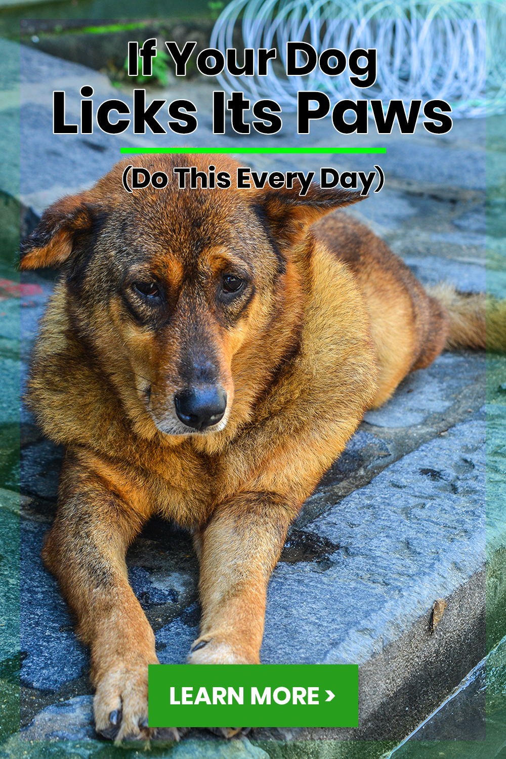 Learn more about this veterinarian's unique approach to