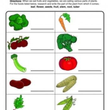 plant parts we eat worksheet  livings we and worksheet &