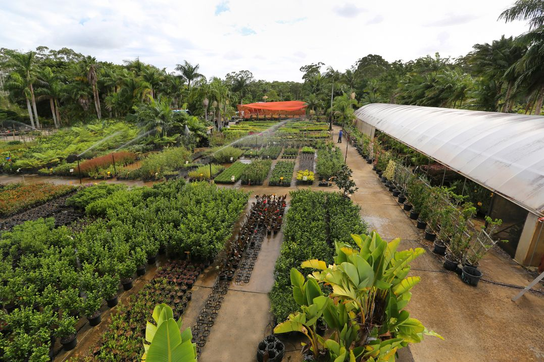 Eplants Whole Nurseries Growing Grounds Acres Of Quality Plants
