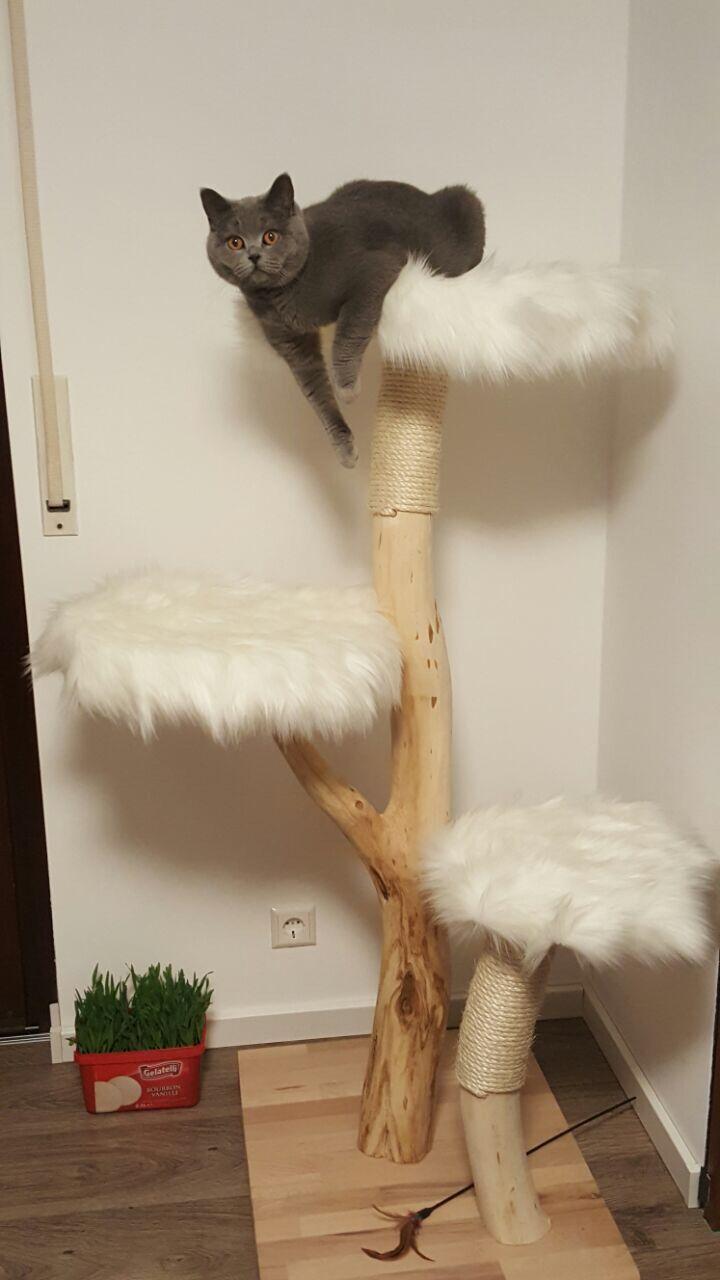 naturkratzbaum   КОТ   pinterest