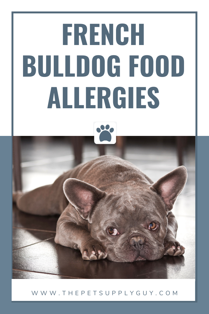 Best Food for a French Bulldog with a Sensitive Stomach in