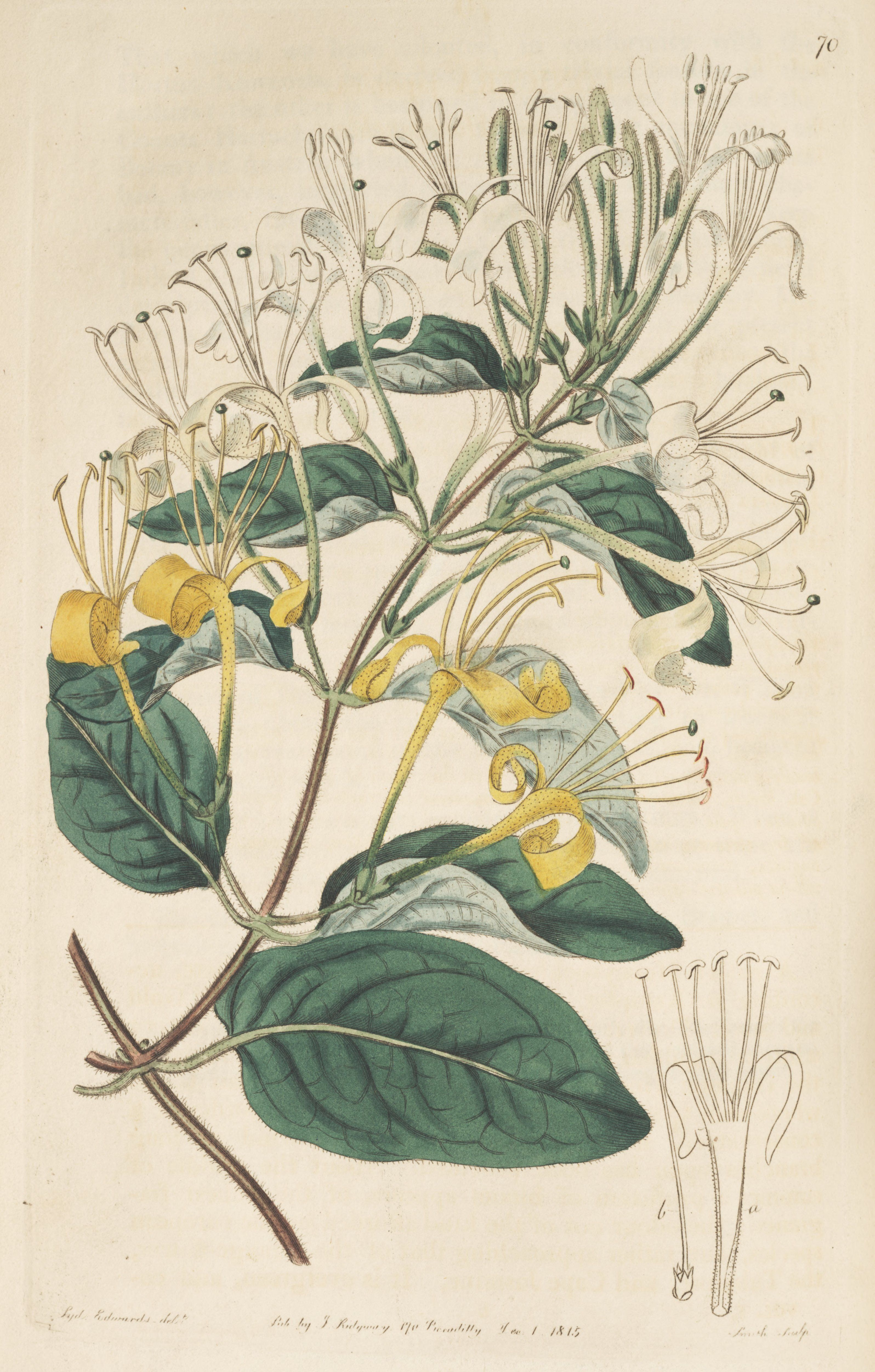 Pin By Don Mcculley On Me Time Botanical Drawings Scientific Illustration Botanical Illustration