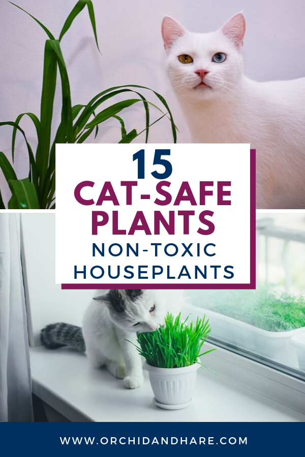 15 Low Maintenance Plants that are Safe for Cats Cat