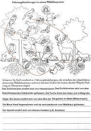 """Képtalálat a következőre: """"schichten des waldes grundschule ..."""