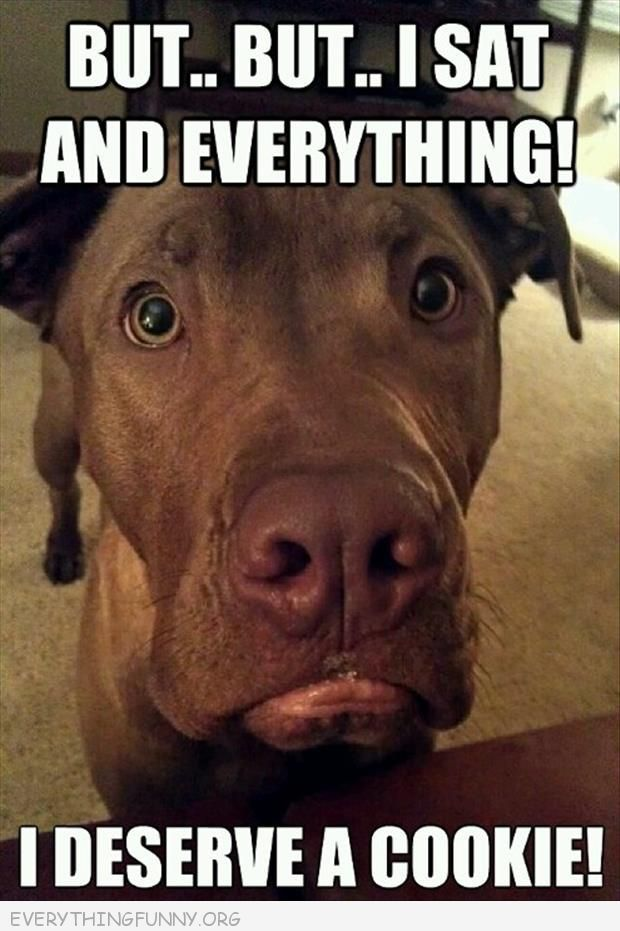 They Do Have The Absolute Best Pouty Faces Funny Dog Memes