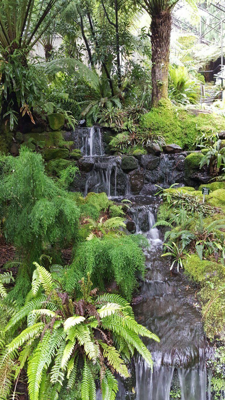 Pin On Hobart Japanese Garden