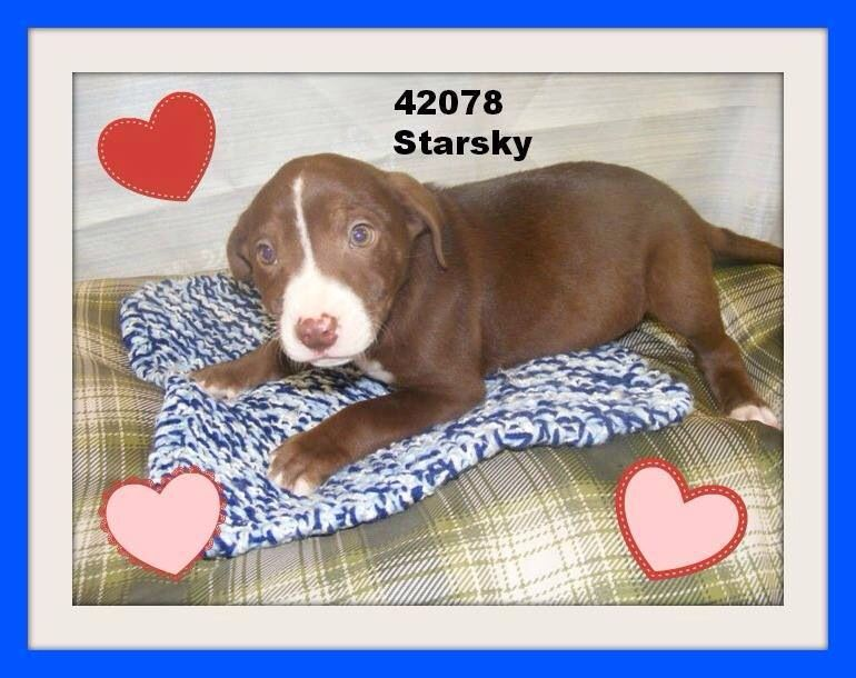Adopt Me Please Shelter Full 42078 Lawrence County Dog Shelter Ironton Oh So Beautiful A Dog Obsessed I Love Dogs Pet Adoption