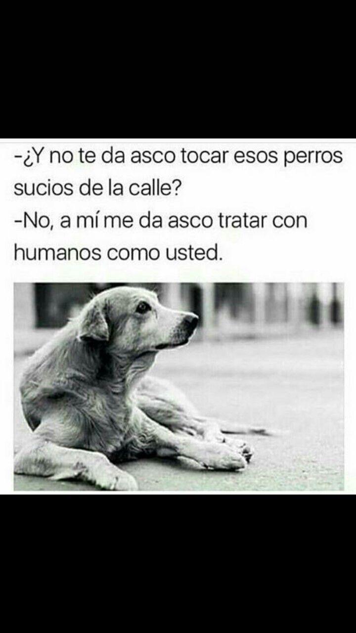 Asco Los Humanos Q Tratan Mal A Los Perros Perros Frases Animales Frases Mascotas Frases