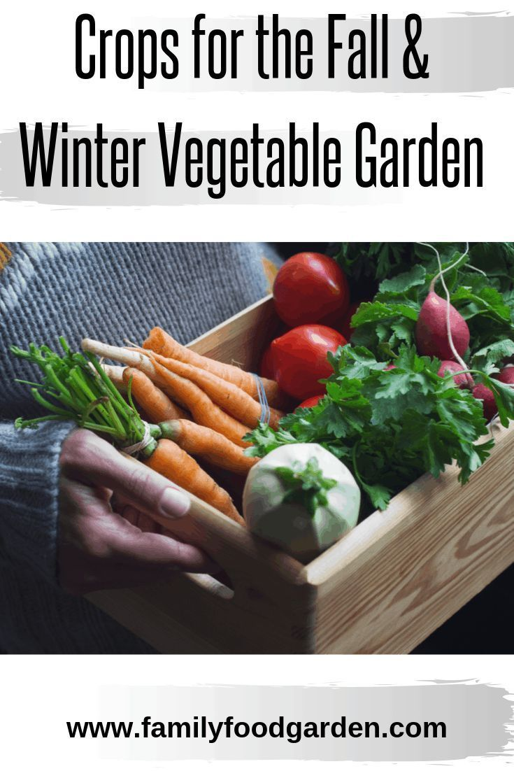 Cold Hardy Crops For The Fall Winter Vegetable Garden 400 x 300