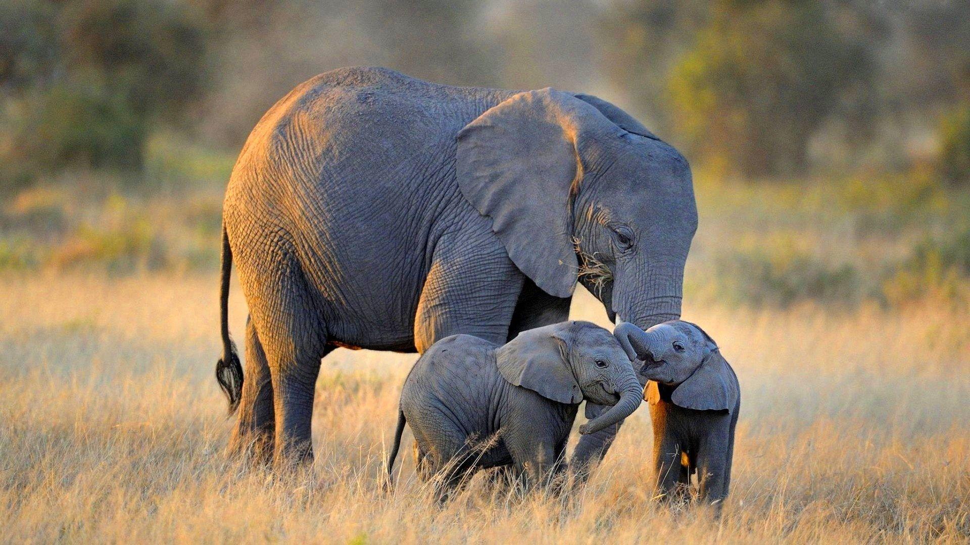 Hd wallpaper elephant - Hd Wallpaper Elephant 47