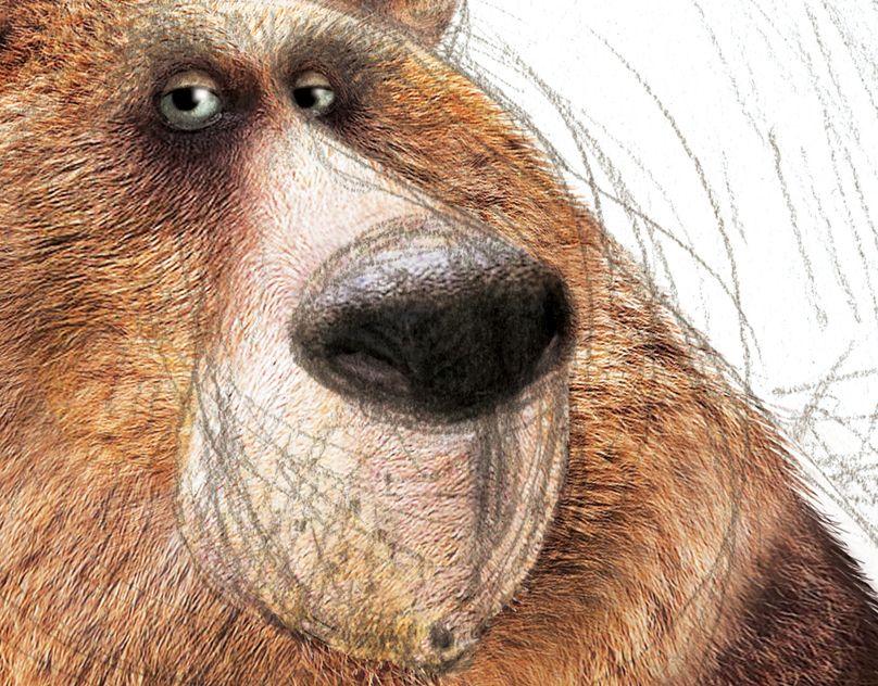 Г.г, рисунок смешной медведь