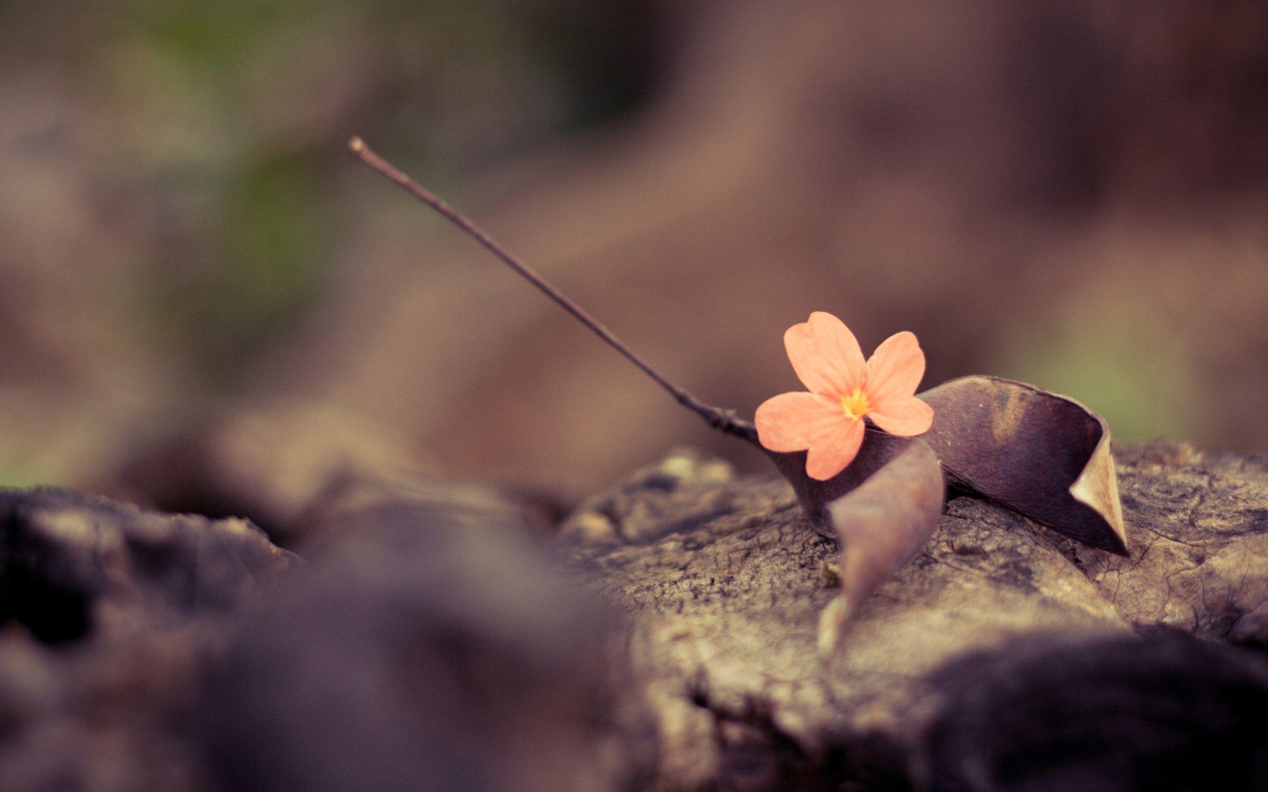 Pin Von Amy Binns Auf Flowers Blumentapete Vintage Blumen