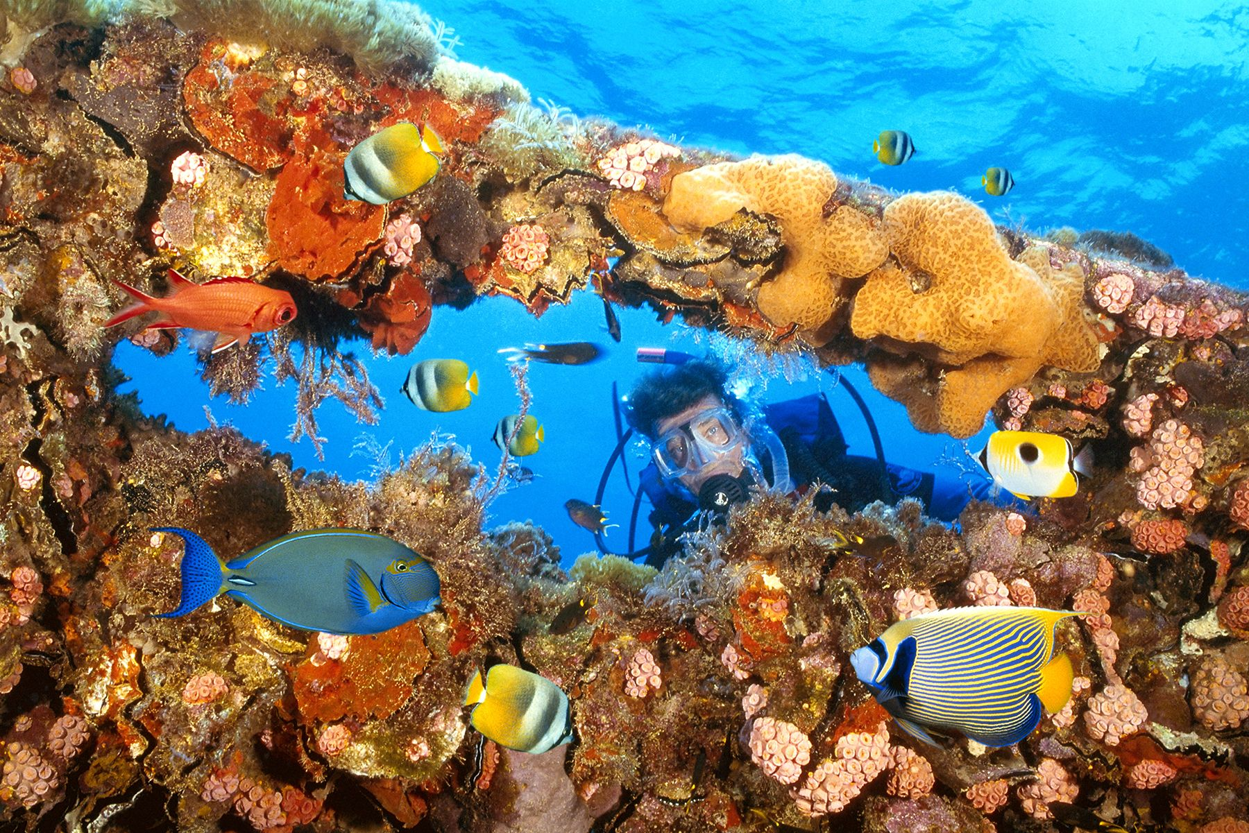 Great Barrier Reef Australia Featuring 400 Types Of Coral