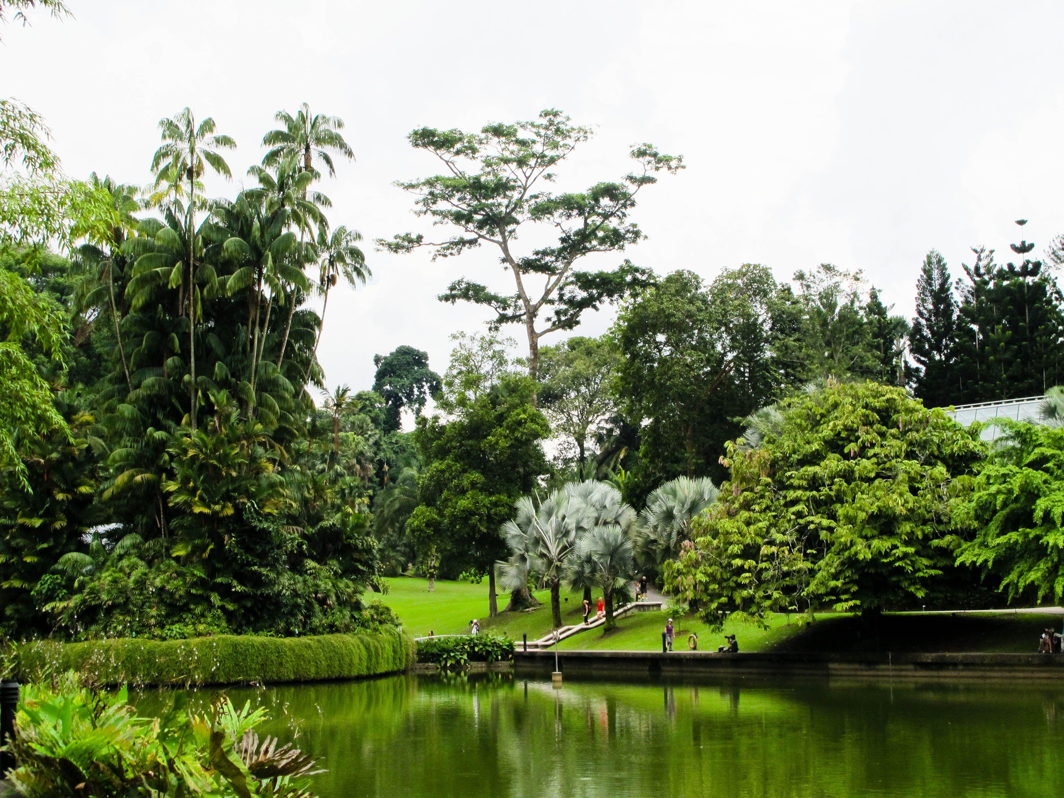 Singapore Botanic Gardens Lake Singapore Botanic Gardens