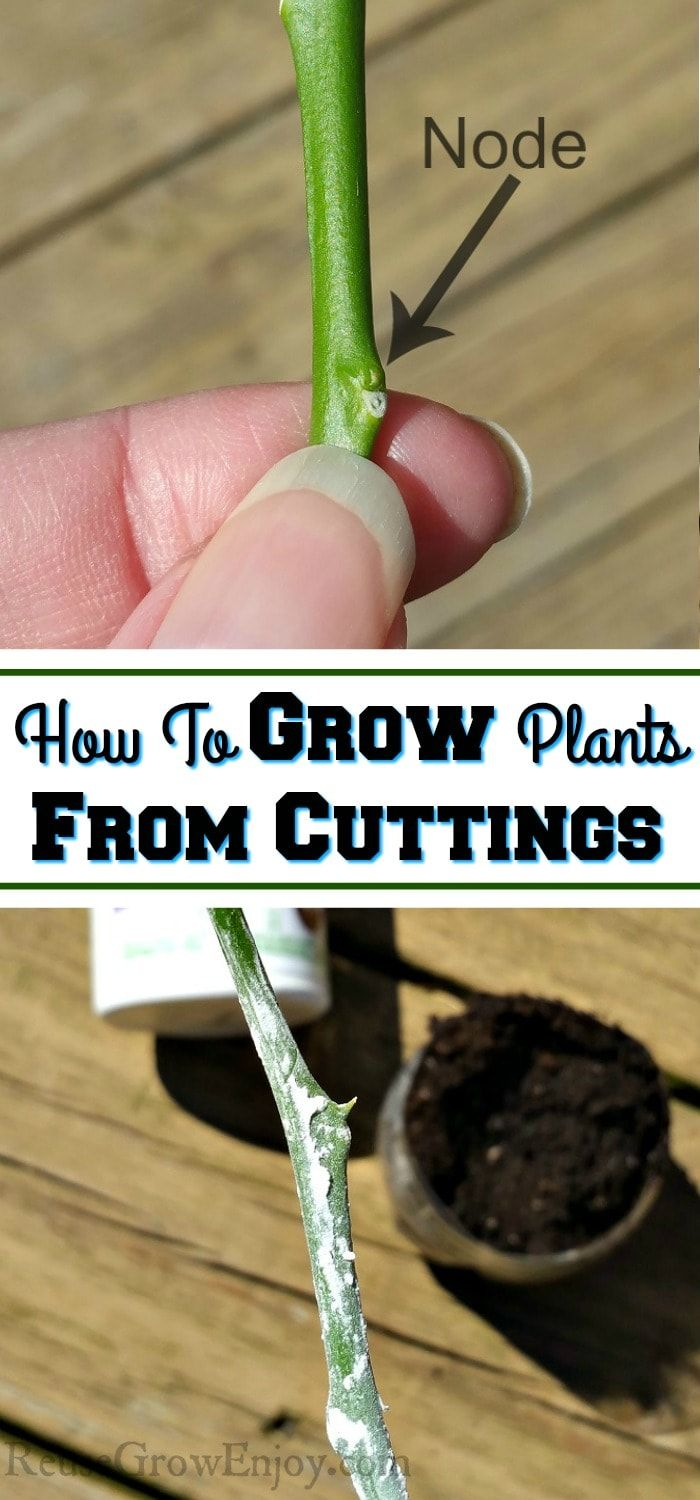 Wanting to try growing plants this year from your own cuttings? Check out these tips on how to grow plants from cuttings! #howtogrowplants