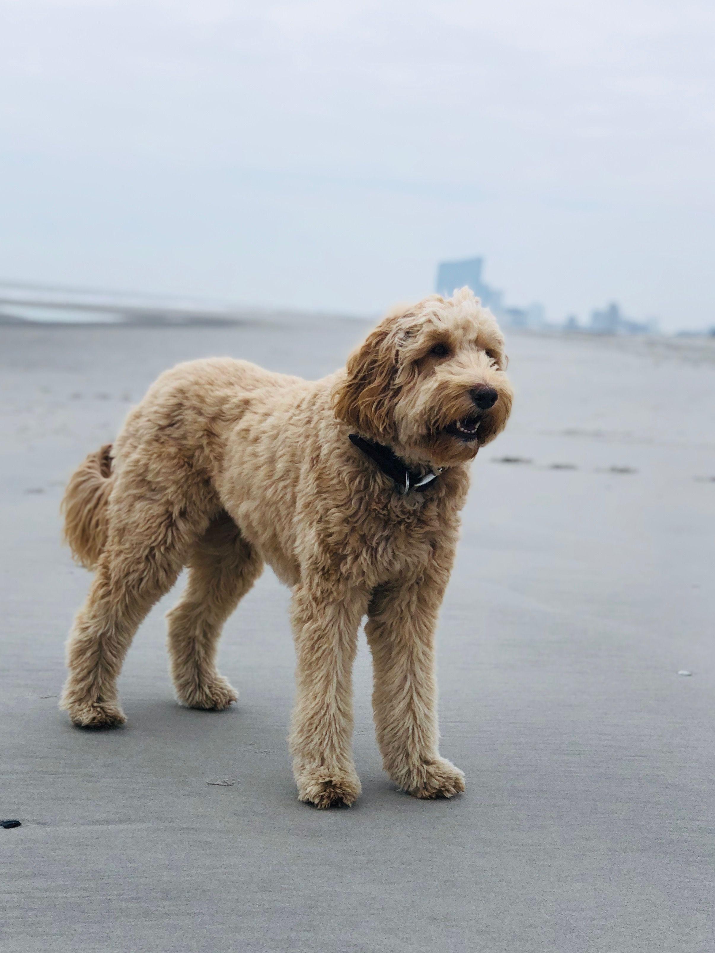 Leather Collar Leather Dog Collars Diy Dog Collar Boy Dog