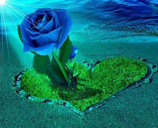 rosas de pintura